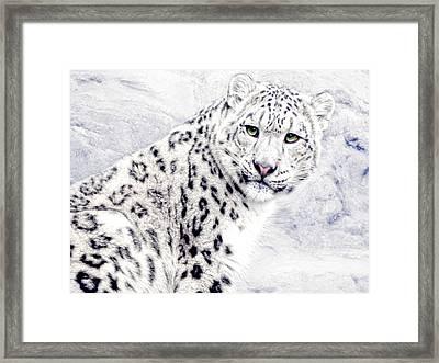 Snow Cat Framed Print by Joachim G Pinkawa
