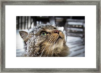 Snow Cat Framed Print