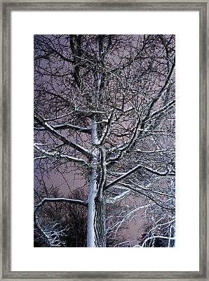 Snow Coat Framed Print