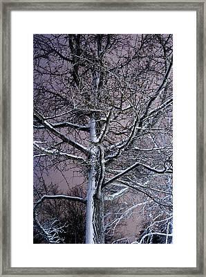 Snow Coat Framed Print by Joe Scott