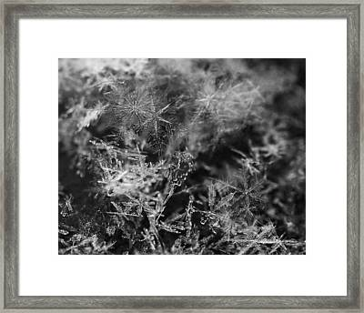 Snow Constellation Framed Print by Rona Black