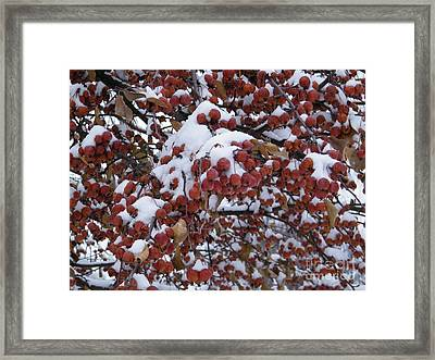 Snow Covered Berries Framed Print