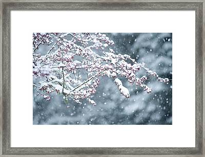 Snow Covered Branch During Snowing Framed Print by Panoramic Images