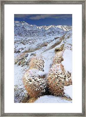 Framed Print featuring the photograph Snow Covered Cactus Below Mount Whitney Eastern Sierras by Dave Welling