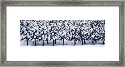 Snow Covered Cedar Trees Kyoto Hanase Framed Print by Panoramic Images