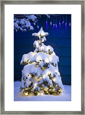 Snow Covered Christmas Tree With White Framed Print by Kevin Smith