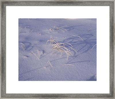 Snow Covered Grass On South Rim, Crater Framed Print