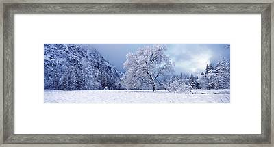 Snow Covered Oak Tree In A Valley Framed Print