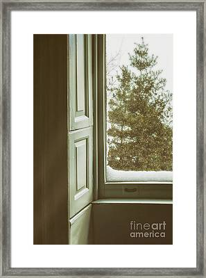 Snow Covered Pine Framed Print by Margie Hurwich