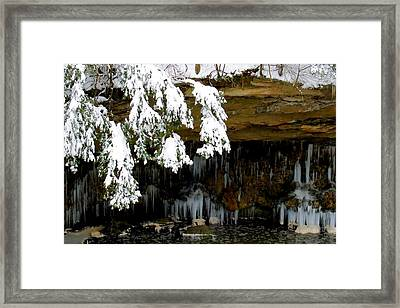 Snow Covered Pine Framed Print