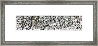 Snow Covered Pine Trees, Deschutes Framed Print by Panoramic Images