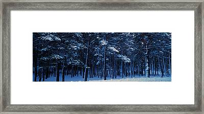 Snow Covered Pine Trees In Winter Framed Print