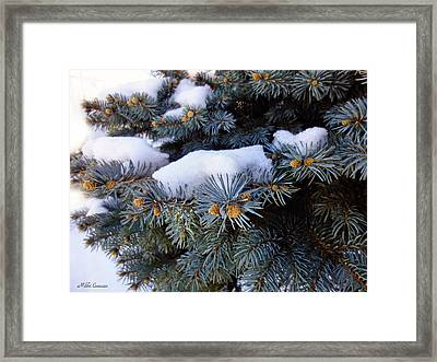Snow Covered Spruce Framed Print by Mikki Cucuzzo