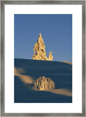 Snow Covered Spruce Tree Against Blue Framed Print