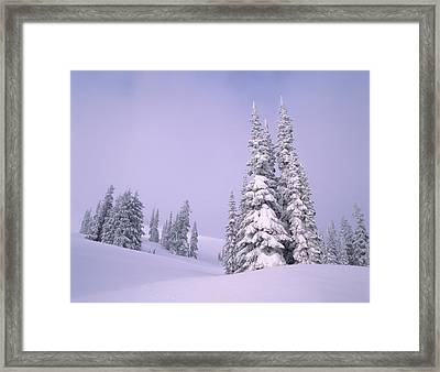 Snow Covered Sub-alpine Fir Trees Framed Print by Panoramic Images