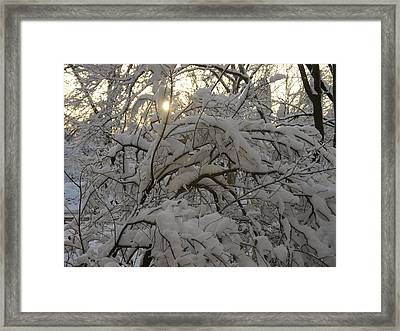 Snow Covered Tree And Sun Framed Print