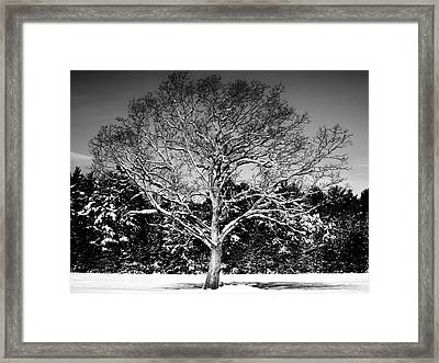 Snow Covered Tree Framed Print