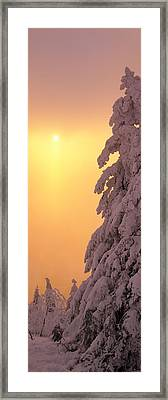 Snow Covered Tree In Winter At Sunset Framed Print by Panoramic Images