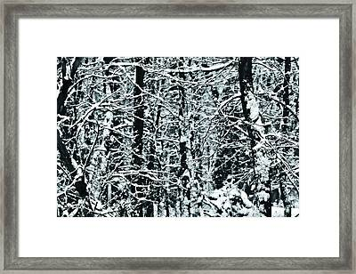 Snow Covered Trees Framed Print by Dan Sproul