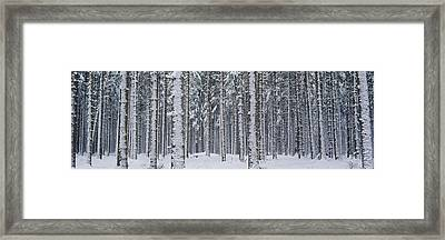 Snow Covered Trees In A Forest, Austria Framed Print
