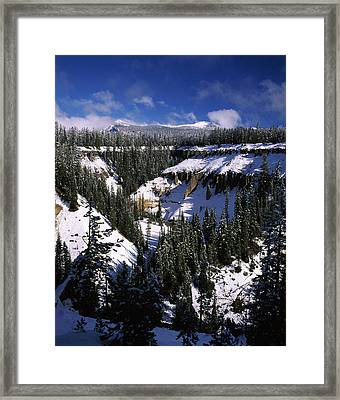 Snow Covered Trees In Winter, Godfrey Framed Print by Panoramic Images