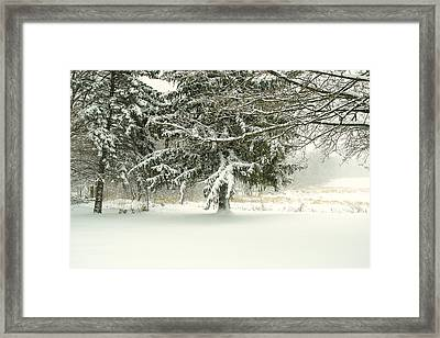 Framed Print featuring the photograph Snow-covered Trees by Lars Lentz