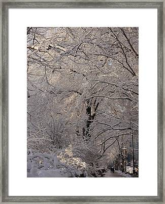 Snow Covered Trees On Central Park West Framed Print by Winifred Butler