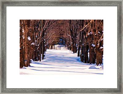 Snow Covered Way Framed Print by Lee Costa