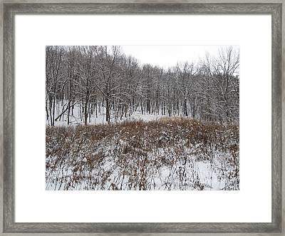 Snow Covered Woodland Framed Print