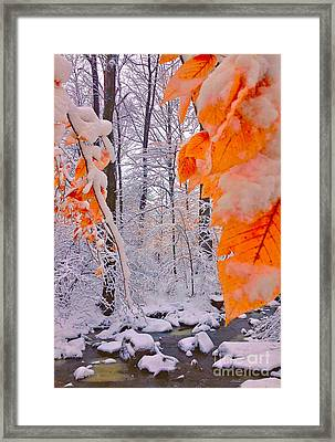 Snow Covered Woods And Stream Framed Print
