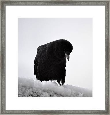 Snow Crow -edition  6 Of 10 Framed Print