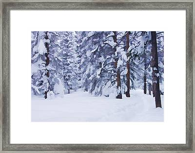 Snow-dappled Woods Framed Print