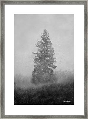 Snow Day Framed Print by Darryl Gallegos