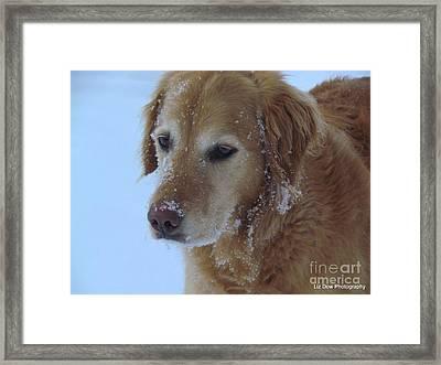 Snow Day Framed Print by Elizabeth Dow