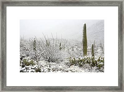 Snow Day In The Desert  Framed Print by Saija  Lehtonen