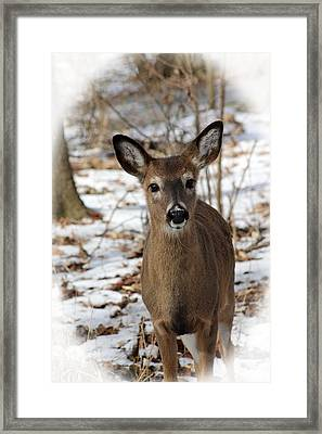 Framed Print featuring the photograph Snow Deer by Lorna Rogers Photography