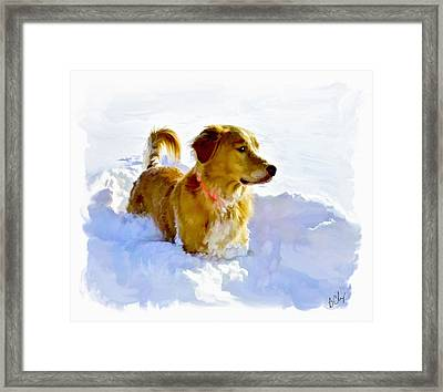 Snow Dog Framed Print by Bradley Clay