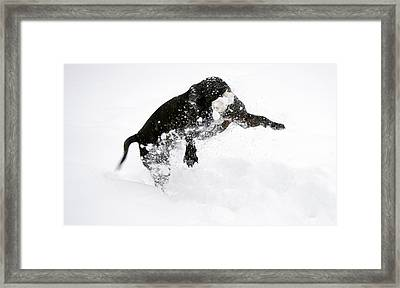 Snow Dog Framed Print by Crystal Harman