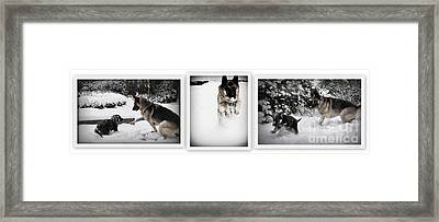 Framed Print featuring the photograph Snow Dogs. Triptich by Tanya  Searcy