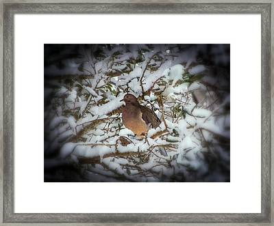 Snow Dove Framed Print