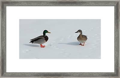 Snow Ducks Framed Print by Mim White
