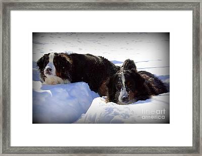 Snow Eaters Framed Print
