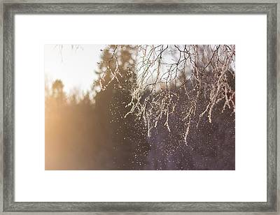 Snow Falling From A Tree Branch II Framed Print