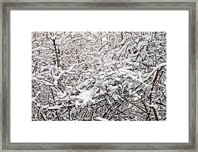 Snow Filled Branches 1 Framed Print by Aimee L Maher Photography and Art Visit ALMGallerydotcom