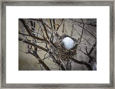 Snow Filled Nest Framed Print by Julie Palencia