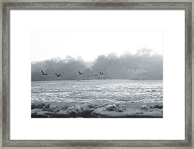 Snow And Geese Framed Print
