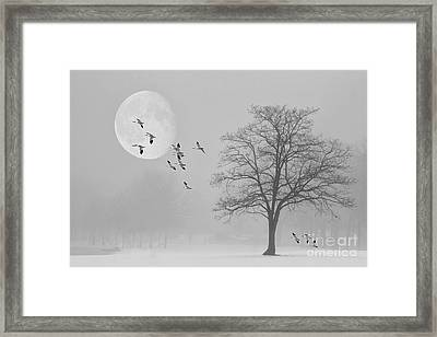 Snow Geese In The Snow Framed Print by Tom York Images