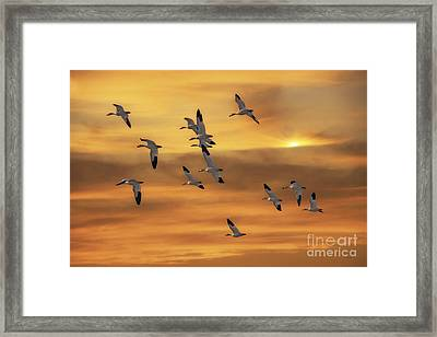 Snow Geese Of Autumn Framed Print