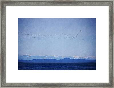 Framed Print featuring the photograph Snow Geese Over The Ocean by Peggy Collins