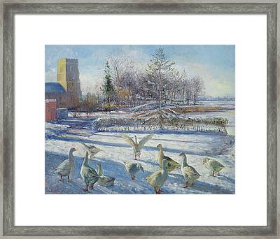 Snow Geese, Winter Morning Framed Print by Timothy Easton